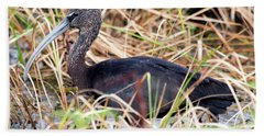 Glossy Ibis 123015 Beach Sheet