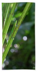 Gold Dust Day Gecko Beach Towel