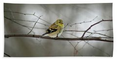 Goldfinch In Winter Looking At You Beach Towel