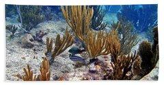 Gorgonian Parrotfish Beach Towel