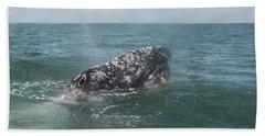 Gray Whale In Bahia Magdalena Beach Towel