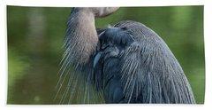 Great Blue Heron After Preening Dmsb0157 Beach Towel