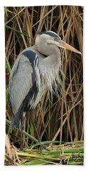Great Blue Heron On Padre Island Beach Sheet