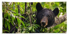 Great Smoky Mountains Bear - Black Bear Beach Towel
