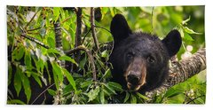 Great Smoky Mountains Bear - Black Bear Beach Towel