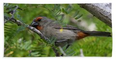 Greater Antillean Bullfinch Beach Towel