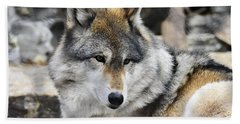 Grey Wolf Beach Towel