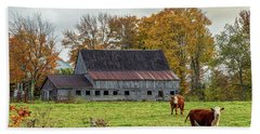 Herefords In Fall Beach Towel