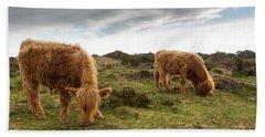 Highland Cattle Feeding At Baslow Edge Beach Towel