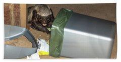 Honey Badger Looking In Rubbish Bin Beach Towel