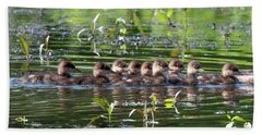 Hooded Merganser Ducklings Dwf0203 Beach Towel