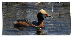 Horned Grebe 102713 Beach Sheet