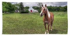 Horse In Pasture Beach Sheet
