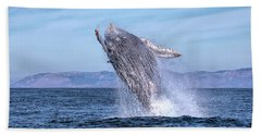 Humpback Breaching - 02 Beach Towel