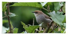 Hunter's Cisticola Beach Towel