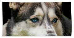 Husky With  Bright Blue Eyes. Portrait Of A Dog. Beach Towel