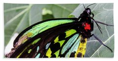 Insect Kaleidescope Beach Towel