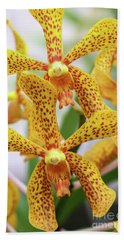 Intriguing Yellow Spider Orchids Beach Towel