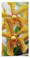 Intriguing Yellow Spider Orchids Beach Sheet