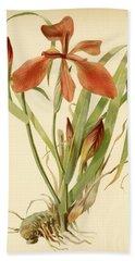 Iris Cuprea Copper Iris.  Beach Towel