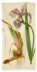 Iris Versicolor Blue Flag Beach Sheet