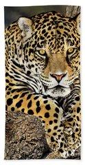 Jaguar Portrait Wildlife Rescue Beach Towel