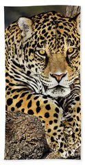 Jaguar Portrait Wildlife Rescue Beach Towel