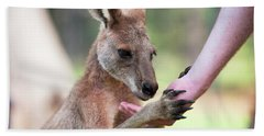 Beach Towel featuring the photograph Kangaroo by Rob D Imagery