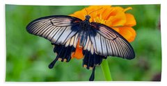 Kite Swallowtail  Beach Towel