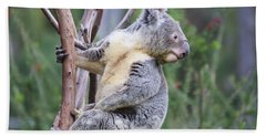 Koala In Tree Beach Sheet