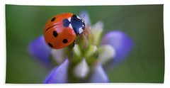 Beach Towel featuring the photograph Lady Bug by John Rodrigues