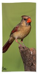Lady Cardinal Beach Sheet