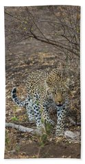 Beach Towel featuring the photograph LC2 by Joshua Able's Wildlife