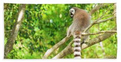 Lemur By Itself In A Tree During The Day. Beach Towel