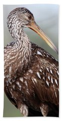 Limpkin Beach Sheet