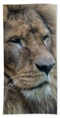 Beach Towel featuring the photograph Lion by Anjo Ten Kate