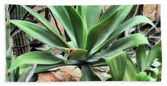 Lion's Tail Agave Beach Towel