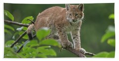 little kitten... Lynx Beach Towel