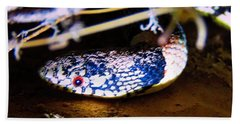 Beach Towel featuring the photograph Longnosed Snake Portrait by Judy Kennedy