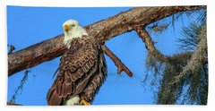 Beach Towel featuring the photograph Lookout Eagle by Tom Claud