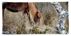 Beach Towel featuring the photograph Lunchtime For Assateague's Gokey Go Go Bones by Bill Swartwout Fine Art Photography