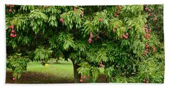 Lychee Ripe For Picking Beach Towel