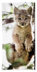 Lynx Kitten In Tree Beach Sheet