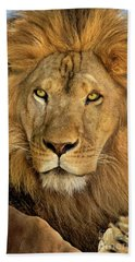 Male African Lion Portrait Wildlife Rescue Beach Towel