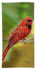 Male Cardinal Headshot  Beach Towel