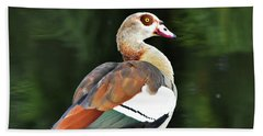 Male Egyptian Goose Beach Sheet