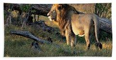 Male Lion In Botswana Beach Sheet