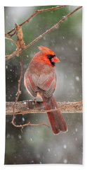 Male Red Cardinal Snowstorm Beach Towel