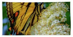 Manassas Butterfly Beach Towel