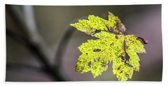 Beach Towel featuring the photograph Maple Bright by Michael Arend